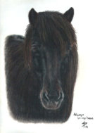 Horse Portraits in pastel pencil