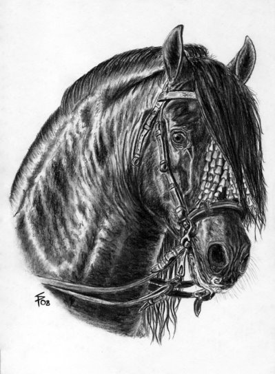 Horse portrait gallery charcoal pencil