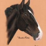 Bruno Pony Gelding