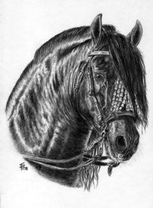 Spanish P.R.E. stallion