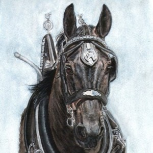 Horse Watercolour Percheron