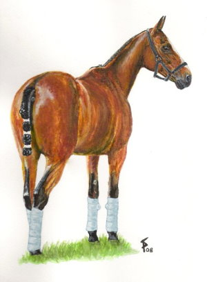 Polo Pony Watercolour