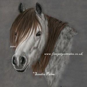 Horse Pastel Portrait Sedna