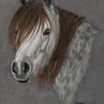 Sedna Welsh Mountain Pony