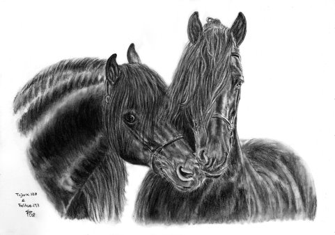 Friesian stallions