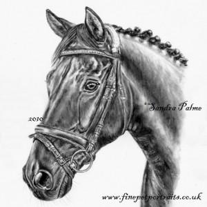 Charcoal Horse Portrait Walentino