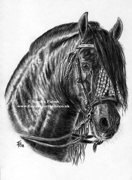 P.R.E. stallion (PURA RAZA ESPAÑOLA)